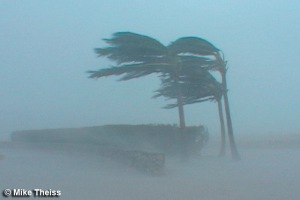 hurricane_palm