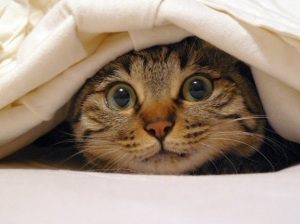 catpeeking