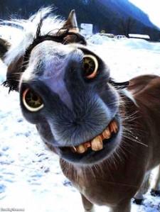 Hillbilly-Horse